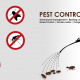 Bed Bugs Treatment Singapore